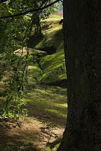 Žampach arboretum - dolní park - lokalita U pěti dubů