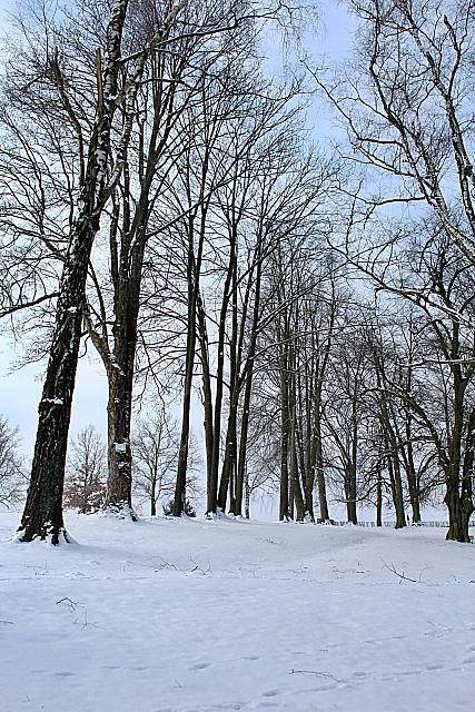 Žampach arboreum - dolní park - stromořadí lemující park na východě - zima