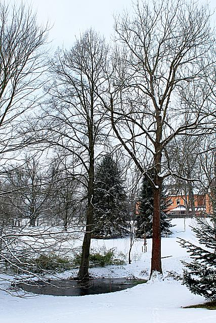 Fraxinus excelsior - jasan ztepilý - zimní habitus - strom vpravo (28)